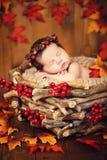 Gulligt nyfött i en krans av kottar och bär i ett trärede med höstsidor Royaltyfri Bild