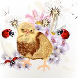 Gulligt påskkort med små höna, blommor och nyckelpigor royaltyfri illustrationer