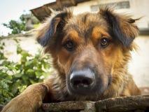 Gulligt posera för hund Arkivfoto