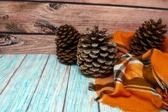 Gulligt sörja kottebakgrund Blänkte stora Jeffrey sörjer kottar och den orange filten Hemtrevligt begrepp royaltyfri foto