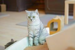 Gulligt se för katt Arkivbild
