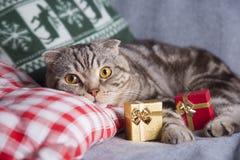 Gulligt skotskt veck med gåvaaskar på den gråa soffan arkivbild
