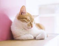 gulligt sova för katt Arkivbild