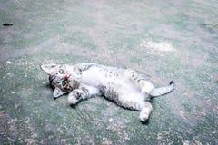 gulligt sova för katt royaltyfri foto
