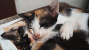 gulligt sova för kattunge Arkivbild