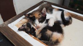 gulligt sova för kattunge Fotografering för Bildbyråer