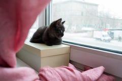 Gulligt svart kattungesammanträde på en ask på fönsterbrädan som ser till och med fönster Arkivfoto