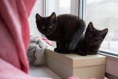 Gulligt svart sammanträde för kattunge två på en ask på fönsterbrädan Arkivbild