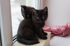 Gulligt svart sammanträde för kattunge två på en ask på fönsterbrädan arkivfoton
