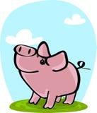 Gulligt svin på gräs Arkivbild