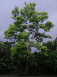 Gulligt träd Royaltyfria Foton