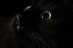 Gulligt tysta ned av en svart katt Arkivbilder