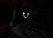Gulligt tysta ned av en svart katt Arkivbild