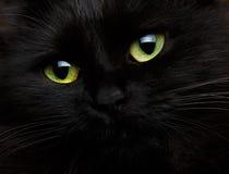 Gulligt tysta ned av ett slut för svart katt upp Arkivfoto