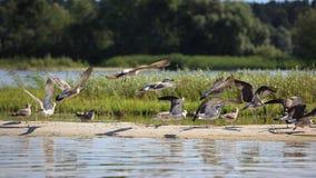 Gulls. Group of gulls on the riverside Stock Photo