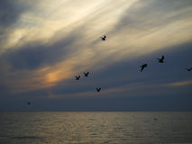 Gulls. Fly over the sea Stock Photography