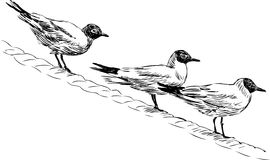 Gulls. Vector image of a three sitting gulls Stock Photos
