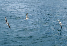 gulls Fotografia Stock