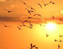 Free Gulls Stock Photo - 4746390