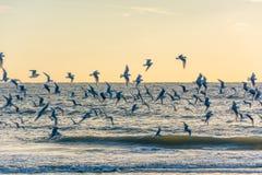 gulls Royalty-vrije Stock Foto