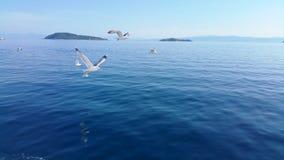 gulls Immagini Stock Libere da Diritti