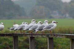 gulls Fotografía de archivo
