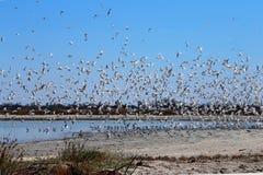 gulls Imagem de Stock Royalty Free