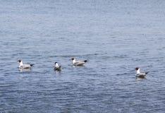 gulls Imagen de archivo