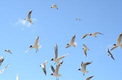 gulls Fotografia de Stock Royalty Free