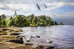 Gulls against the backdrop of the Church of St. Nicholas the Won Stock Photos