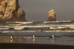 Gulls Along Ocean Rocks. A trio of Western Gulls along a rocky outcrop and the Pacific Ocean in California Stock Photo
