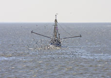 Gulls around dutch shrimper, Wadden Sea, Ameland Stock Photo