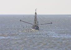 Gulls around dutch shrimper, Wadden Sea, Ameland Stock Photo