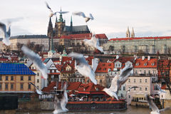 Gulls on the background of the historical center of Prague Royalty Free Stock Photography