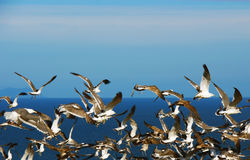 Gulls on the background of the sea. Royalty Free Stock Images