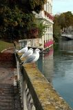 3 gulls Stock Image