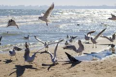 Gulls on the beach stock image