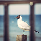 Gulls on the beach. Polish Baltic coast Royalty Free Stock Photography