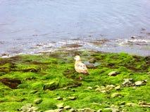 A gulls on beach Royalty Free Stock Photos