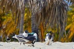 Gulls on the beach Stock Photos