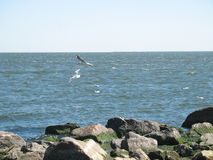 Gulls on the beach stock photography