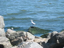 Gulls on the beach Stock Photo