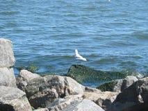 Gulls on the beach Stock Image