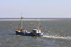 Gulls behind dutch shrimper at Wadden Sea, Ameland Royalty Free Stock Photo