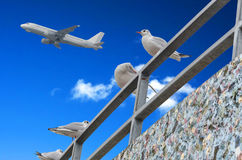 Gulls, blue sky, airplane Royalty Free Stock Image