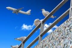 Gulls, blue sky, airplane Royalty Free Stock Image
