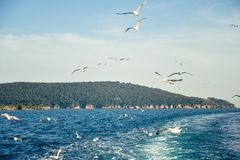 Gulls in the sky Stock Image