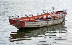 Gulls on a boat Stock Photos