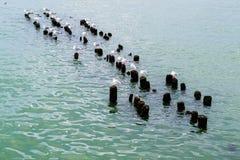 Gulls on the breakwater. Frozen seagulls on the breakwater. Svetlogorsk Royalty Free Stock Image
