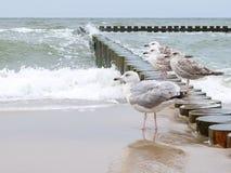 Gulls on the breakwater Stock Image